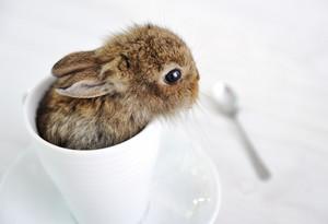 Rabbit cute baby