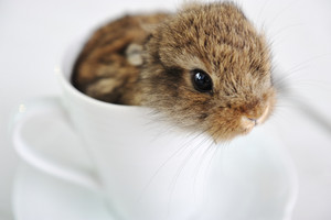 Rabbit cute baby in cup
