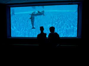 People enjoying watching dolphins