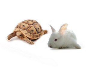 Bunny and turtle competition concept