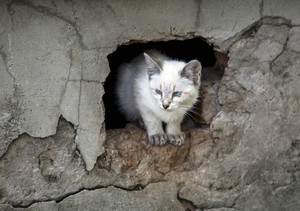 Kitten peeking out of a hole Furry pets
