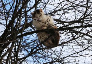 The cat climbed the tree