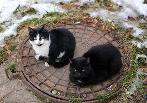 Cats on the hatch