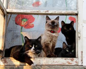 Cat on the window pane