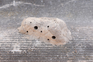 Nests of clay belonging wasp Clay camera in the nest and store food for larvae of them The socket has input and ventillyatsionnye openings