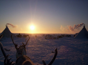 Reindeer against a tundra landscape Life on Yamal
