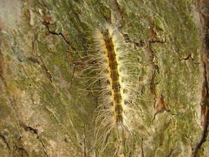 The Caterpillars eat plants - agricultural  a pests