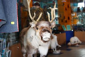Reindeer Stuffed animals