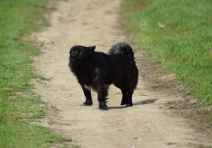 Black dog on a dirt road Pedigree dog yard