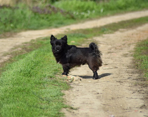 Black dog on a dirt road Pedigree dog yard
