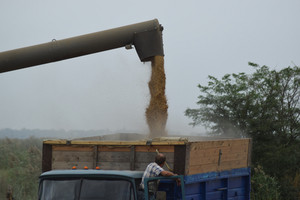 Unloading grain from a combine into a truck. agricultural machinery for harvesting from the fields.