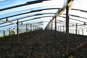The greenhouse for growing vegetables in greenhouses. agriculture.