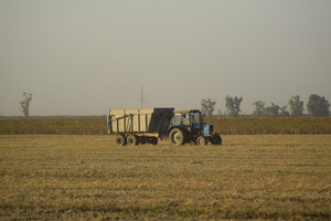 Soy harvesting by combines in the field. agricultural machinery in operation. tractor with trailer for the grain.
