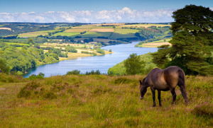 Pony at beautiful Wimbleball Lake Exmoor National Park Somerset England UK