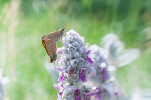 Beautiful butterfly sitting on plant