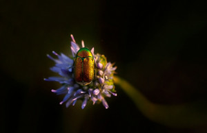Little bug macro