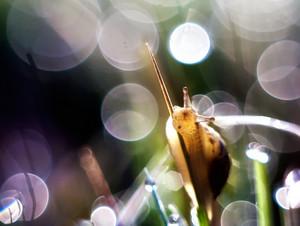 Beautiful snail macro
