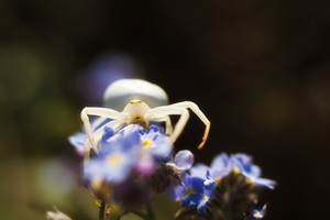 Flower Spider in nature