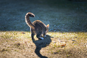 Young cat playing outdoor