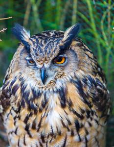 Beautiful owl portrait