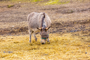 Herd of animals standing on pasture.