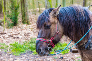 Horse in harness - animal portrait