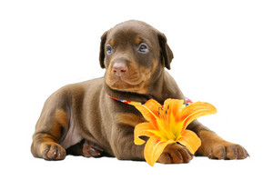 Puppy and flower