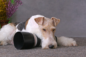 Dog and lens