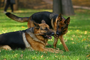Two shepherds playing