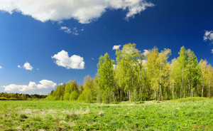 Classical Meadow And Forest Spring Landscape