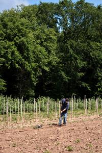 Man Farming Crops
