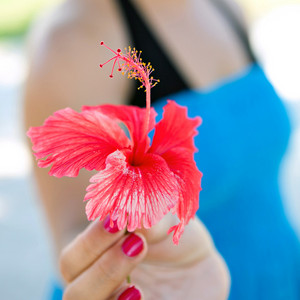 Red Hibiscus Flower Closeup