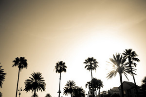 Sepia Palm Trees Silhouette
