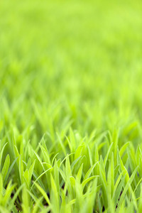 Green Grass Foliage
