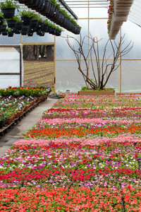 Greenhouse Nursery with Flowers