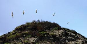 Block Island Seagull Timelapse