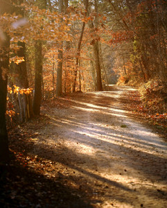 A beautiful pathway that cuts through the autumn forest.
