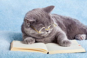 A blue british business cat wearing glasses reading notebook (book)