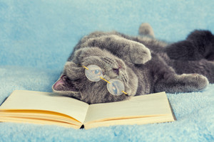 A blue british cat wearing glasses lying and sleeping on back on the book