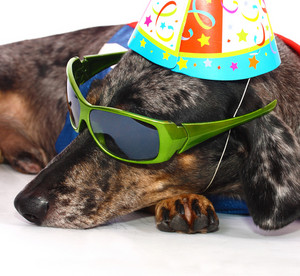 A Dog's Life Having Fun At A Party