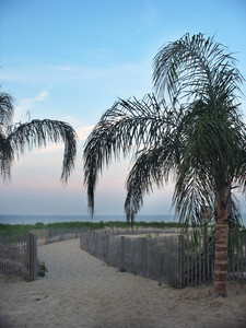 A few palm trees on the beach in Ocean City, Maryland.