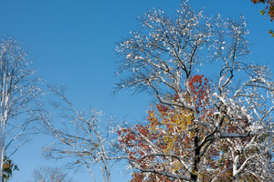 A freak snowstorm in the October fall season coats the colorful leaves with snow and ice.