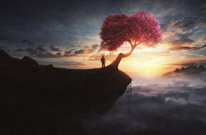 A man climbs to the top of a mountain to find a single cherry tree.