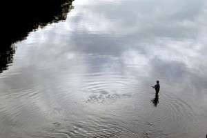 A patient fly fisherman enjoying a calm section of the Farmington River found in Connecticut.