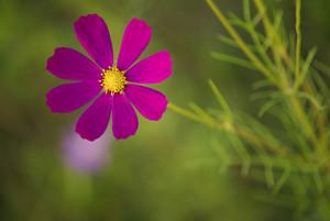 A Purple Flower on blur bokeh background