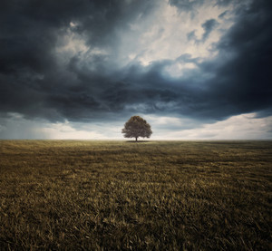 A single tree under storm clouds in a field