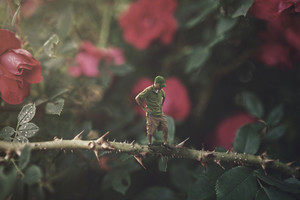 A small man stands on a rose bush covered in thorns