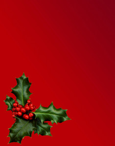 A Sprig Of Holly Isolated On A Red Background