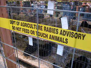 A stripe of yellow tape that reads DEPT OF AGRICULTURE RABIES ADVISORY DO NOT FEED OR TOUCH ANIMALS