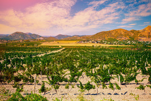 A valley of vineyards against mountain